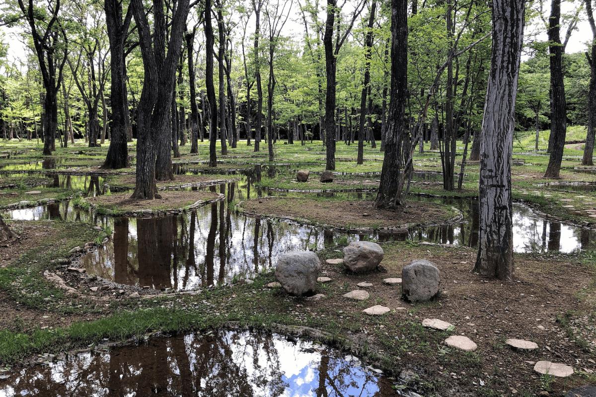 「水庭」という自然界の家におじゃまする